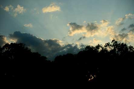 Cumberland Island, Dawn