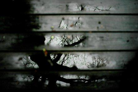 Oak Tree Reflected in Rainy Deck Boards